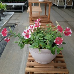 Wholesale Petunia Seeds - High Quality 100 Pcs Wave Petunia Flower Seeds Mixed Annual ,Professional Pack