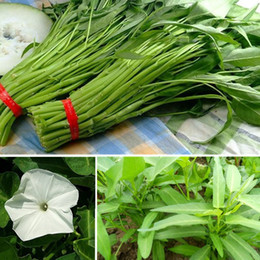New Arrival 250pcs Water Spinach Bamboo Large Leaf Organic Swamp Green Vegetable Seeds Coupon