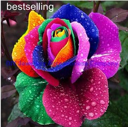 Wholesale Roses Gardens - Free shipping 200pcs Seeds Rare Holland Rainbow Rose Flower Lover Multi-color Plants Home Garden rare rainbow rose flower seeds