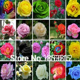 Wholesale Rose Garden Colors - Sale!300 piece 16 Colors rose seeds New Garden Flowers Four Season Sowing World Rare Flower Seeds For Garden