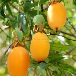 Wholesale Fruits Passion - 20 Banana Passion Fruit Seeds -Passiflora mollisimaspecial,Free Shipping TT422