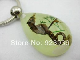 Wholesale Real Seahorse Jewelry - wholesale FREE SHIPPING 10 PCS REAL SEAHORSE COOL MARINE GLOW LUCITE KEYRING KEYCHAIN INSECT JEWELRY TAXIDERMY GIFT