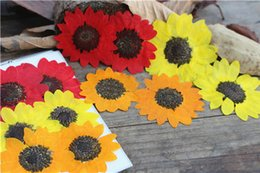 Wholesale Raw Materials - 2017 New Sunflower Dried Pressed Flower Manufacturers in China For Wall Painting Raw Material Free shipment 60pcs Wholesales