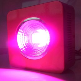 Wholesale Led Grow Lights For Cheap - High quality cheap price Full Spectrum 200w Double lense LED Grow Light Red Blue White UV IR For hydroponics and indoor plants