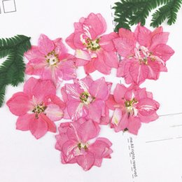 Wholesale Diy Cell Case - 12pcs per bag Different Pink Color Larkspur DIY Pressed flowers Bouquet cell phone case wholesale Free Shipment
