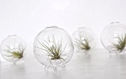 Wholesale Miniature Glass Containers - 4pcs set Marimo Terrarium Kits   Moss Ball Aquarium    Miniature Footed Bud Vase Container    Home Decor    Office Gift