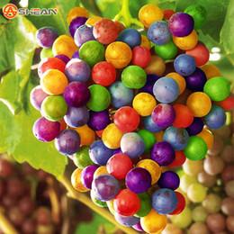 100 semi / confezione Importati semi di uva arcobaleno seme di frutta avanzato crescita naturale uva deliziose piante da frutto da rose gialle semi fornitori