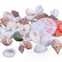 Wholesale Mixed Sea Shells - New Approx 100g Beach Mixed SeaShells Mix Sea Shells Shell Craft SeaShells Aquarium #67179