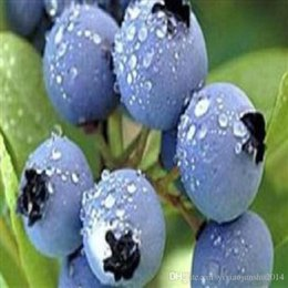 Wholesale Wholesale Blueberry - 2016 Limited Promotion Herbs Plastic Pot Seeding Blue Berry Seeds, 1 Pack About 100 Pieces Oem Package, Blueberry Fruit Seeds Diy Countyard
