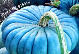 Ornamentali blu online-Verdure semi 20pcs perenne Rare ornamentale commestibile di semi di zucca blu Jarrahdale esotico giardinaggio domestico Blu grigio colorazione fai da te