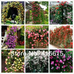 fiore di semi di rose Sconti 450 Pz Rose rampicanti Semi, Piante rampicanti, Semi di fiori cinesi, 9 Varietà di specie, ognuna delle varietà 50 Pezzi, + Regalo