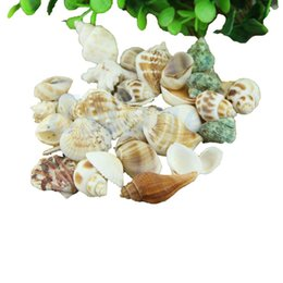Wholesale Beach Shells Crafts - Free Shipping Approx 100g Mixed Beach SeaShells Mix sea Shells SeaShells Craft Aquarium
