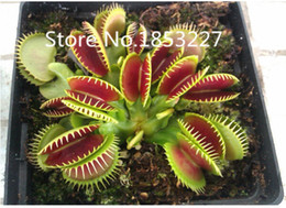 Wholesale garden clips - Free shipping Dionaea Muscipula Giant Clip Venus flytrap Seeds 100PCS Insectivorous seed Garden Plant Seed Bonsai Family Potted
