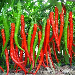 Растения красного перца онлайн-Длинные семена острого перца бонсай растения красный острый перец чили перец съедобные фрукты и овощи для сада вкусные ингредиенты