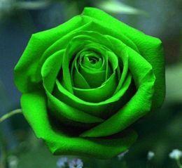 belle perenni Sconti 100 Pezzi Rare Green Rose Seeds Lover Rose Seed Beautiful Flower Symbolism Love Perenne Piante esotiche Fiori Balcone Giardino Giardino