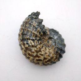 "Jade de chifre on-line-Goat Horn"" Fossil Screw Natural Polido Jade Cristal Pedra Rocha Gemstone Specimen Mineral Gem presente de Natal para"