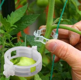 Utensili per ortaggi online-Clip di supporto per piante da giardino Plastica Pomodoro Veggie Clip 50 pz / set Traliccio Spago Serra Verdure Attrezzo da giardino 120 pz AAA1528