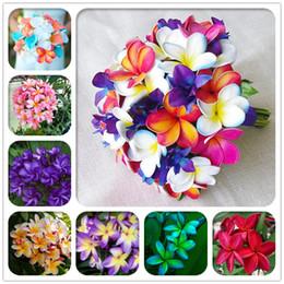 rari fiori esotici Sconti 100 Pz / borsa Plumeria (Frangipani, Hawaiian Lei Flower) Semi, Rari semi di fiori esotici Semi di fiori d'uovo per giardino domestico
