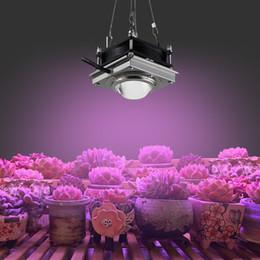 Il giardino interno ha portato a crescere le luci online-COB LED coltiva la luce 150W Phyto lampada Per Piante Fitolampy dell'interno della lampada Full Spectrum Grow tenda di sicurezza Giardino chiaro per le piante Fiori
