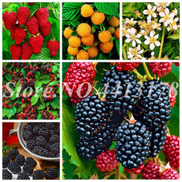 Bolsas de enredadera online-500 pcs  bag Chinese Wild Raspberry Mixed Color Giant Bonsai Potted Creepers Mulberry Fruit For Home Garden Plant Easy Grow