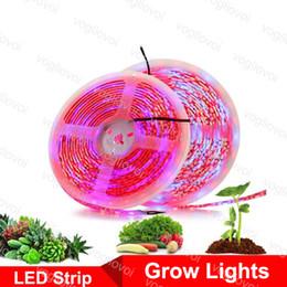 Los leds crecen ligeros online-LED Grow Lights 5M Phyto Lamps Full Spectrum LED Strip Light 300 LED 5050 Chip Fitolampy Impermeable para invernadero Planta hidropónica DHL