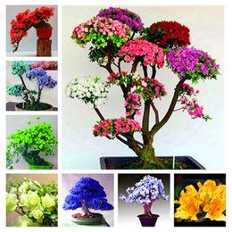fiori azalea Sconti 100 pz Semi Di Azalea Giapponese Rododendro Azalea Semi Di Fiori Piante Da Giardino Domestico FAI DA TE Sembra Sakura Ciliegio Giapponese Fiorisce Semi di Fiori