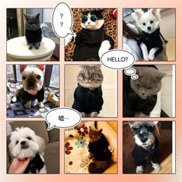 Cane da cattura online-Cani di animali domestici Vestiti in pile di cachemire solido Cattura di moda stampato Felpe con cappuccio Autunno Inverno Cane gatto caldo Supplies11qc E1