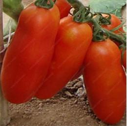 2019 pomodori biologici 100 pz Rare Pomodoro Bonsai Organico Heirloom Piante Verdure Perenne Non OGM Piantare Pot Per La Casa Giardino Plangters C19041601 sconti pomodori biologici