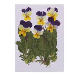 violas flowers Promo Codes - 12pc Pressed Real Pansy Flowers Dried Flower Leaves Viola Tricolor Flower For Phone Case Decor DIY Project