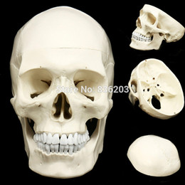anatomy models Promo Codes - Human anatomy skeleton life size anatomical Teaching Model brain skull traumatic pistol school supplies medical instruments