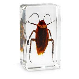Giocattoli per insetti per bambini online-Biologia di scarafaggio Campione di resina acrilica Insetti reali incorporati Fermacarte Trasparente Mouse Blocco Kid Nuova scienza ApprendimentoIstruzione Giocattoli