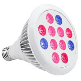 Argentina E27 llevó el bulbo del PAR de la luz de la planta del interior LED de las luces cada vez mayor para el invernadero del jardín, el hidropónico y el balcón de la familia 12W 24W 9W 10pcs Suministro