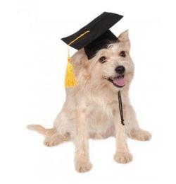 gafas de plástico para perros Rebajas Cachorro Perro doctor gorra Disfraz Cosplay fiesta estudiante grado borla graduación sombrero mascota suministros Ropa Accesorios ne