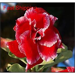 5Pcs Blue with White Side Desert Rose Flower Plant Seeds Plant Bonsai Garden Hot