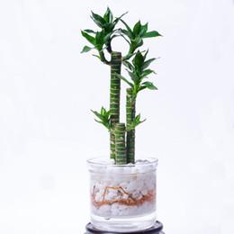 1pc 400ml termoresistente ciotola di vetro Planter Vase Flower Pot w / infusore Drop Shipping da