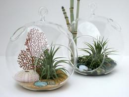 Wholesale Glass Hanging Plant Terrarium - Free Shipping-2PCS set 10cm glass airplants indoor plant garden terrarium garden decor,home decoration