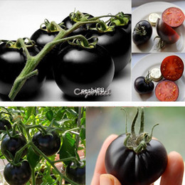 Wholesale Pearl Tree - Vegetable fruit seeds Black pearl fruit nutrition tomatos seeds Bonsai plants Seeds for home & garden 20pcs Bag B003 SV002837