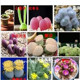 Wholesale 100 Rare Mix Lithops Seeds Living Stones Succulent Cactus Organic Garden Bulk flower seeds