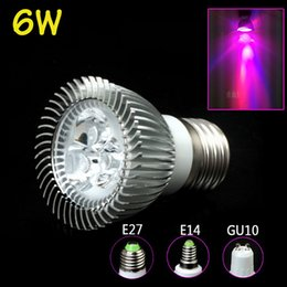 Wholesale Cheapest Led Wholesale Growing Lights - Newest SPOT LIGHT 6W GU10 E27 E14 AC85-265V 2Red 1Blue LED Bulbs For Flowering Plant and Hydroponic System Cheapest Led Grow Light