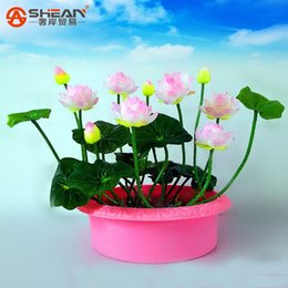 Wholesale plant farms - A Pack 20 Pcs Pink white Bowl Lotus Seeds Balcony Patio Garden Potted Bonsai Plant Seeds Farm Nelumbo Nucifera Seed