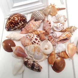 Wholesale Art Platforms - Wholesale 480g New Arrival Household bathroom products Mediterranean romance platform decoration decorate wedding starfish conch shells