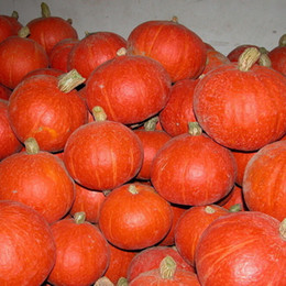 Wholesale Winter Seeds - Green Healthy Red Lovely Sweet Delicious Sweet Pumpkin Seed ,Happy Farm-winter squash ,Color packaging seeds-about 10 particles