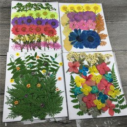 Wholesale Real Raw - Candle Ornaments Mixed Raw Material Real Pressed Flowers And Leaves For DIY Accessories 5 Bags Wholesales