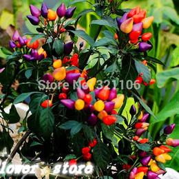 sementes ornamentais de pimenta Desconto 100pcs multicoloridas sementes ornamentais de pimenta, adicionar cor brilhante lindo para o seu jardim
