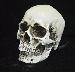 Wholesale Realistic Skeleton Human - Human Skull Replica Resin Model Medical Realistic NEW Party Masks skeleton Collection Handicraft terror fine arts TY932