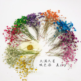 Discount flower pressing - 80pcs Free Shipment Pressed Flower Dried Flower Natural Flowers Diy Materials Color Absorption Dye Babysbreath Sale Home Decoration
