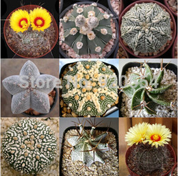 semi di cactus Sconti Vendita calda 20 pz misto cactus (Astrophytum) piante piante grasse piante semi giardino domestico di DIY spedizione gratuita