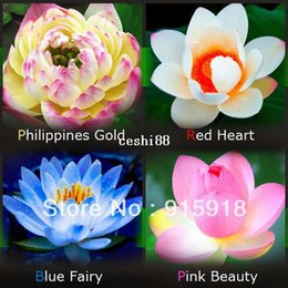 Wholesale lotus flowers wholesale - Flower seeds Lotus Seeds - Four Color Blue Pink Gold White ,4 Pack Each Pack 10 Seeds Total 40 Flowers Seeds