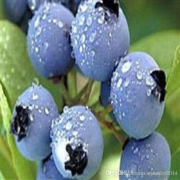 Wholesale Tree Pots Plastic - 2016 Limited Promotion Herbs Plastic Pot Seeding Blue Berry Seeds, 1 Pack About 100 Pieces Oem Package, Blueberry Fruit Seeds Diy Countyard