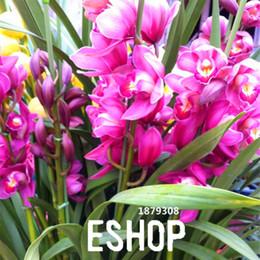 bonsai di acero rosso giapponese Sconti Promozione di perdita! 100 Pz / lotto Rosso Cymbidium Orchidea Balcone Semi di Bonsai Bonsai Giardino Semi di Fiori Orchidea, # QMCKLT